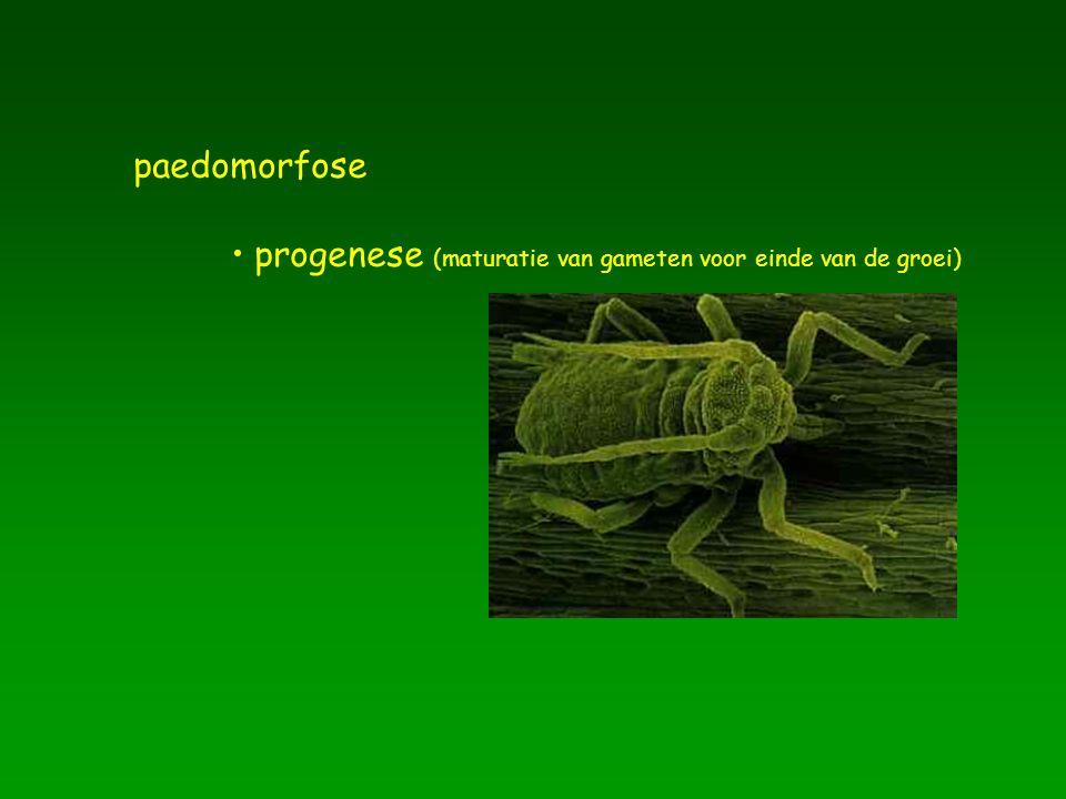 paedomorfose progenese (maturatie van gameten voor einde van de groei)