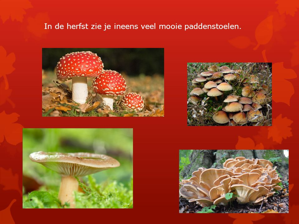 In de herfst zie je ineens veel mooie paddenstoelen.