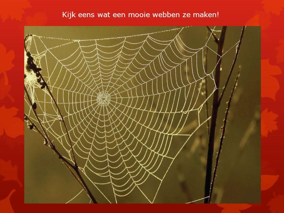 Kijk eens wat een mooie webben ze maken!