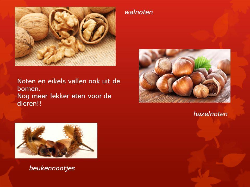 Noten en eikels vallen ook uit de bomen. Nog meer lekker eten voor de dieren!! walnoten hazelnoten beukennootjes