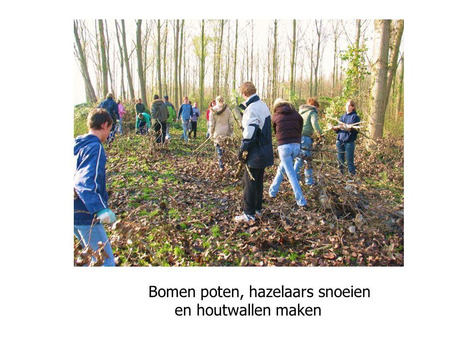 Bomen poten, hazelaars snoeien en houtwallen maken