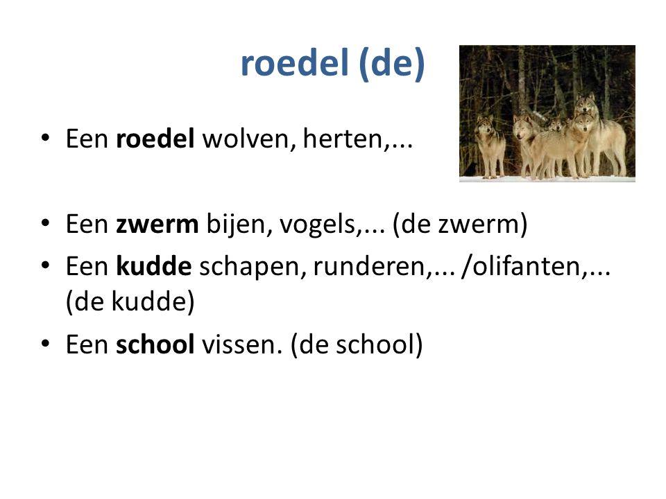 roedel (de) Een roedel wolven, herten,... Een zwerm bijen, vogels,...