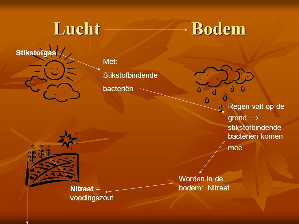 Lucht Bodem Stikstofgas Met: Stikstofbindende bacteriën Nitraat = voedingszout Regen valt op de grond → stikstofbindende bacteriën komen mee Worden in