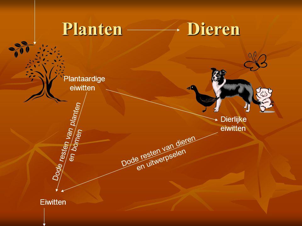 Planten Dieren Dode resten van planten en bomen Plantaardige eiwitten Dierlijke eiwitten Dode resten van dieren en uitwerpselen Eiwitten