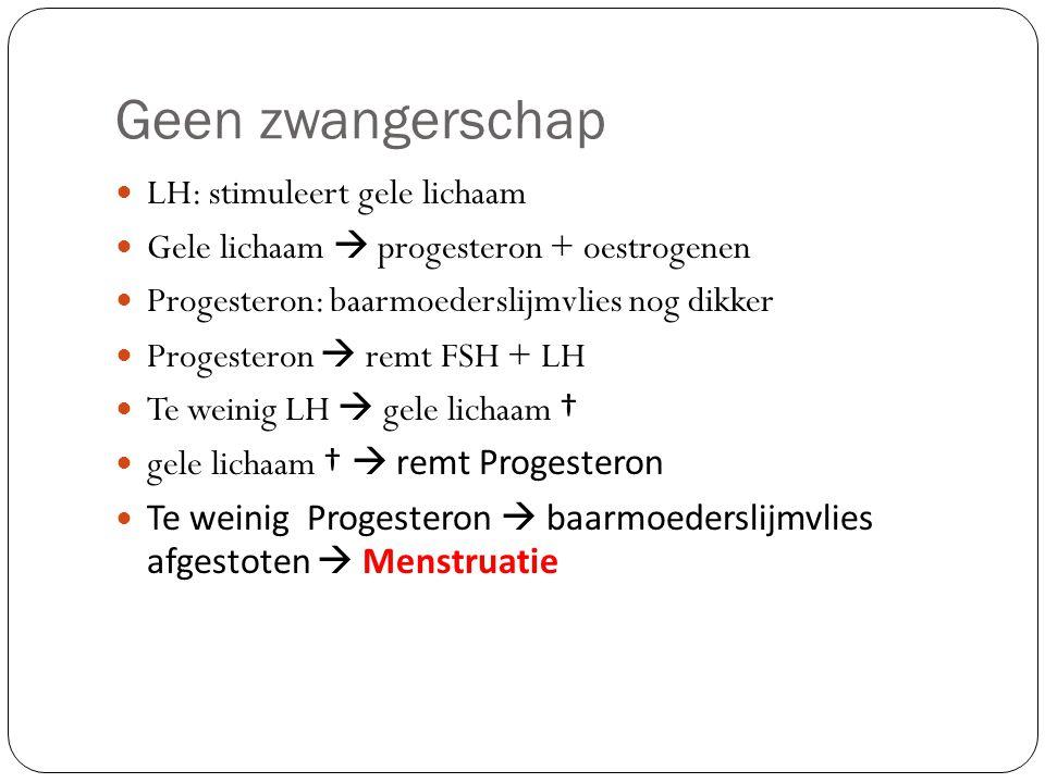 Geen zwangerschap LH: stimuleert gele lichaam Gele lichaam  progesteron + oestrogenen Progesteron: baarmoederslijmvlies nog dikker Progesteron  remt