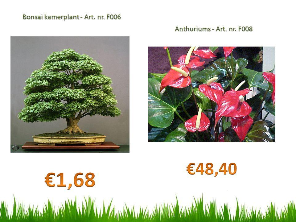 Bonsai kamerplant - Art. nr. F006 Anthuriums - Art. nr. F008