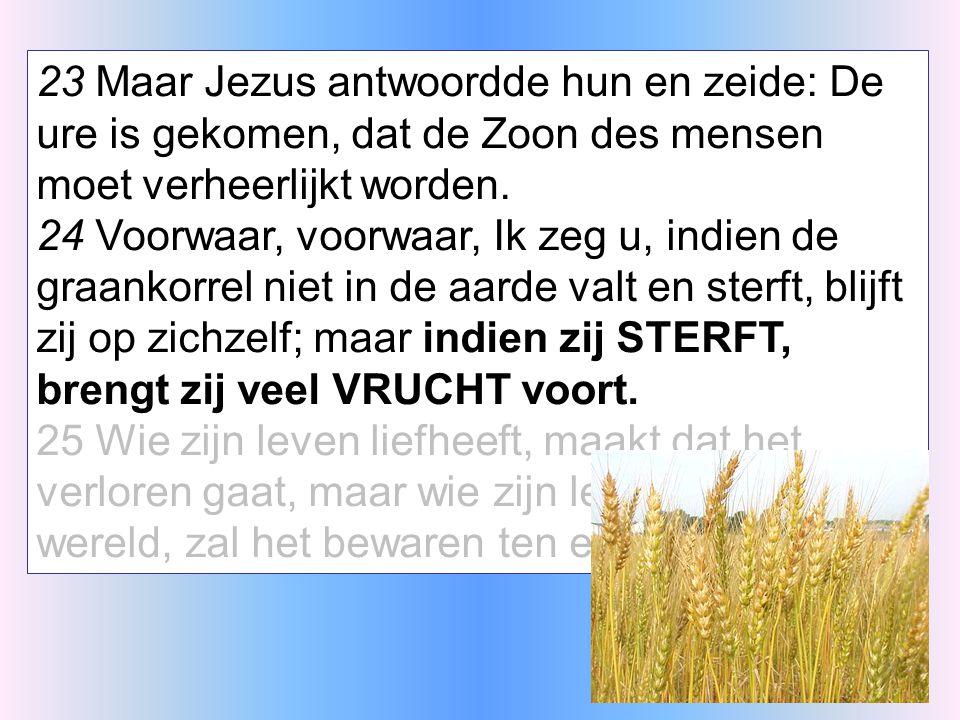 23 Maar Jezus antwoordde hun en zeide: De ure is gekomen, dat de Zoon des mensen moet verheerlijkt worden.