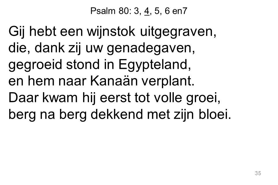 35 Psalm 80: 3, 4, 5, 6 en7 Gij hebt een wijnstok uitgegraven, die, dank zij uw genadegaven, gegroeid stond in Egypteland, en hem naar Kanaän verplant.
