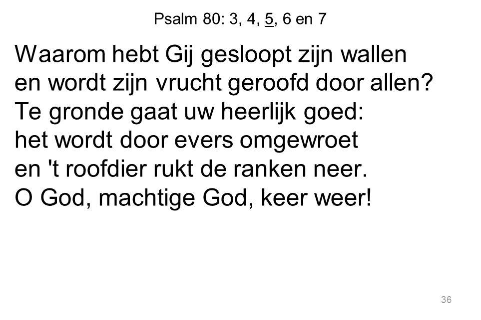 36 Psalm 80: 3, 4, 5, 6 en 7 Waarom hebt Gij gesloopt zijn wallen en wordt zijn vrucht geroofd door allen.