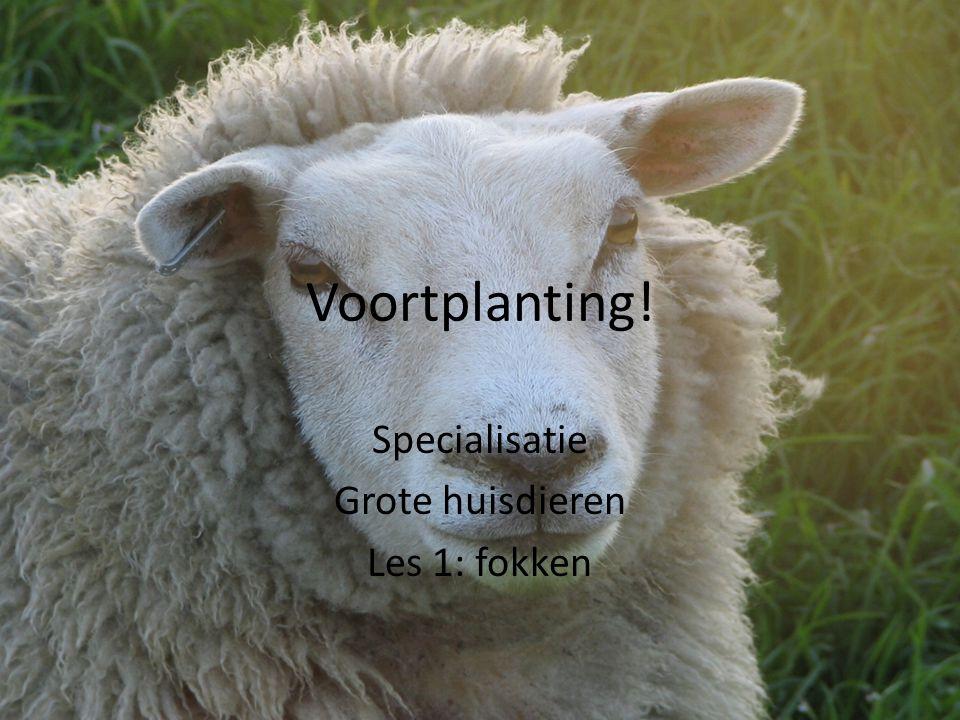Voortplanting! Specialisatie Grote huisdieren Les 1: fokken