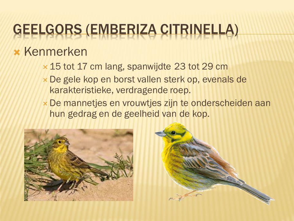  Leefomgeving & Verspreiding  Het nest wordt laag bij de grond gemaakt, goed verscholen in een dichte vegetatie.  2 tot 4 legsels per jaar met 5 to