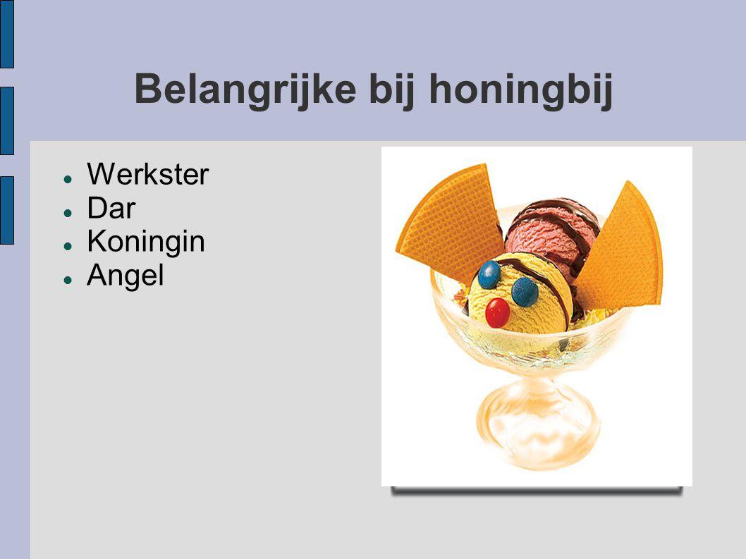 Belangrijke bij honingbij Werkster Dar Koningin Angel