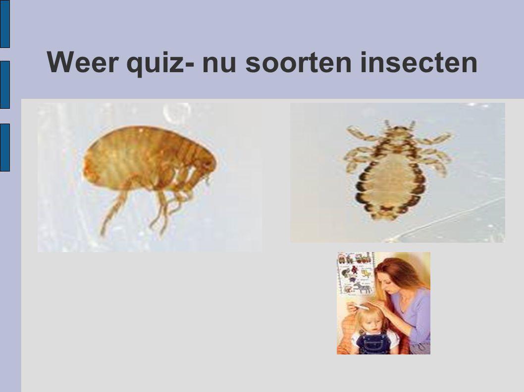 Weer quiz- nu soorten insecten