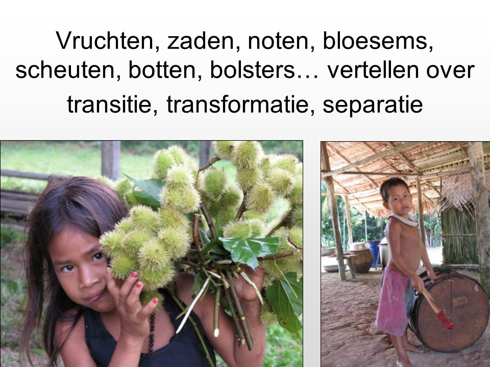 Vruchten, zaden, noten, bloesems, scheuten, botten, bolsters… vertellen over transitie, transformatie, separatie