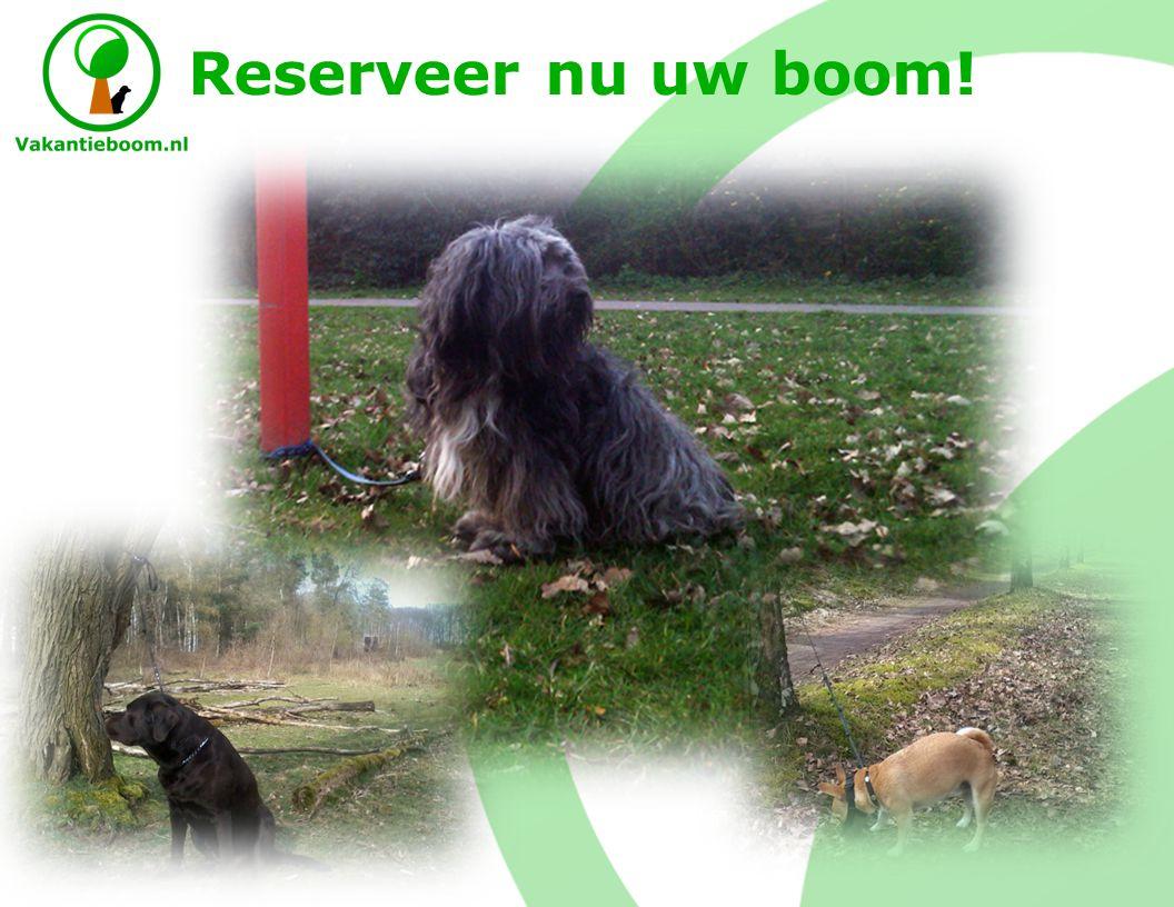 Concept Een plek voor hondeneigenaren aanbieden om hun hond aan een boom te binden voordat ze op vakantie gaan.