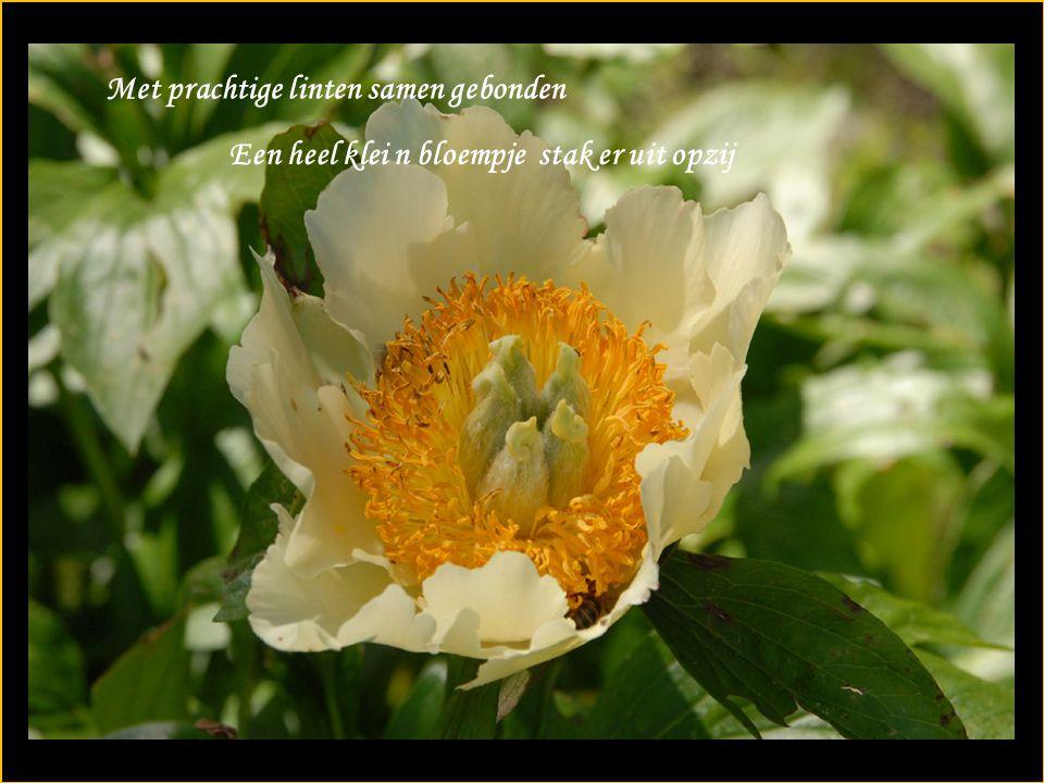 Met prachtige linten samen gebonden Een heel klei n bloempje stak er uit opzij