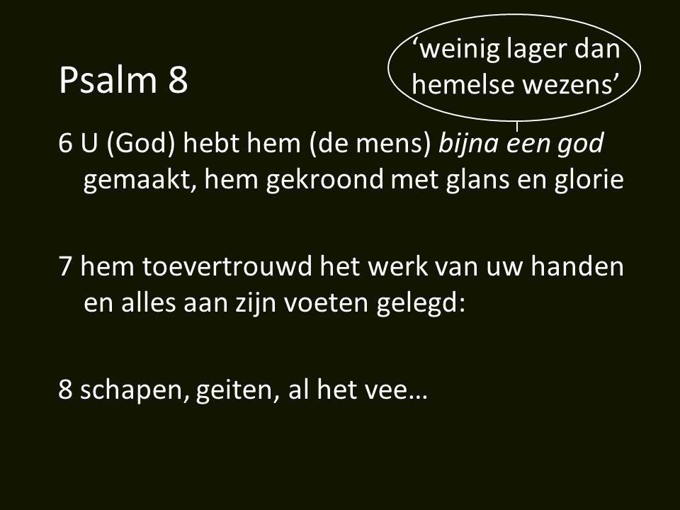 Psalm 8 6 U (God) hebt hem (de mens) bijna een god gemaakt, hem gekroond met glans en glorie 7 hem toevertrouwd het werk van uw handen en alles aan zijn voeten gelegd: 8 schapen, geiten, al het vee… 'weinig lager dan hemelse wezens'