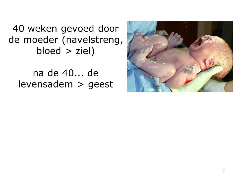 7 40 weken gevoed door de moeder (navelstreng, bloed > ziel) na de 40... de levensadem > geest