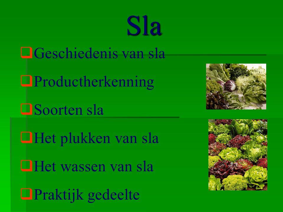 Geschiedenis  Herkomst  Naam  Intrede van salade in Nederland