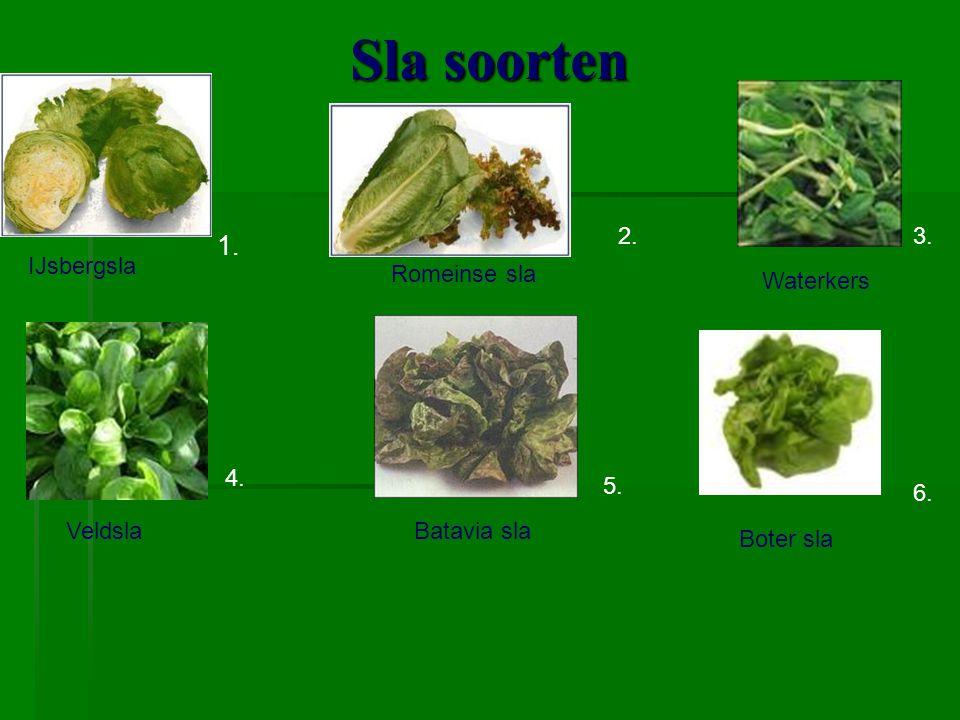 Sla soorten Krulandijvie ( Frisee) Eikenbladsla Lollo rosso Rucola 7. 9. 10. 11. 8Radicchio