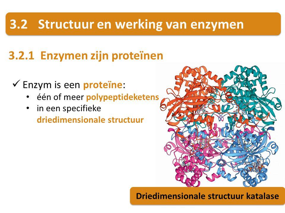 3.2Structuur en werking van enzymen 3.2.1 Enzymen zijn proteïnen Driedimensionale structuur katalase Enzym is een proteïne: één of meer polypeptideket