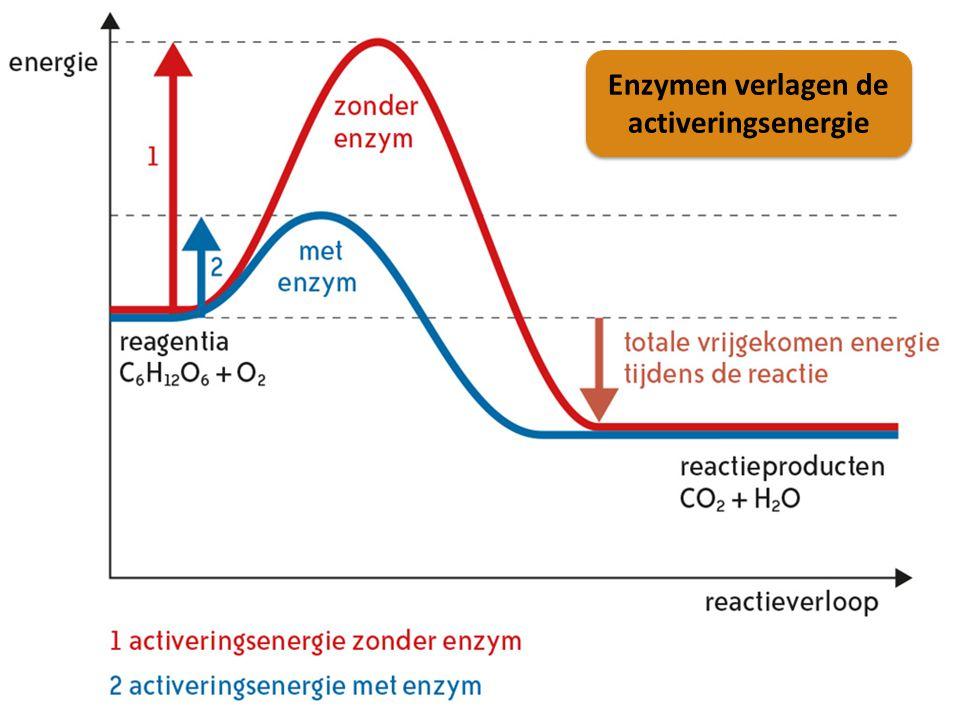 Enzymen verlagen de activeringsenergie