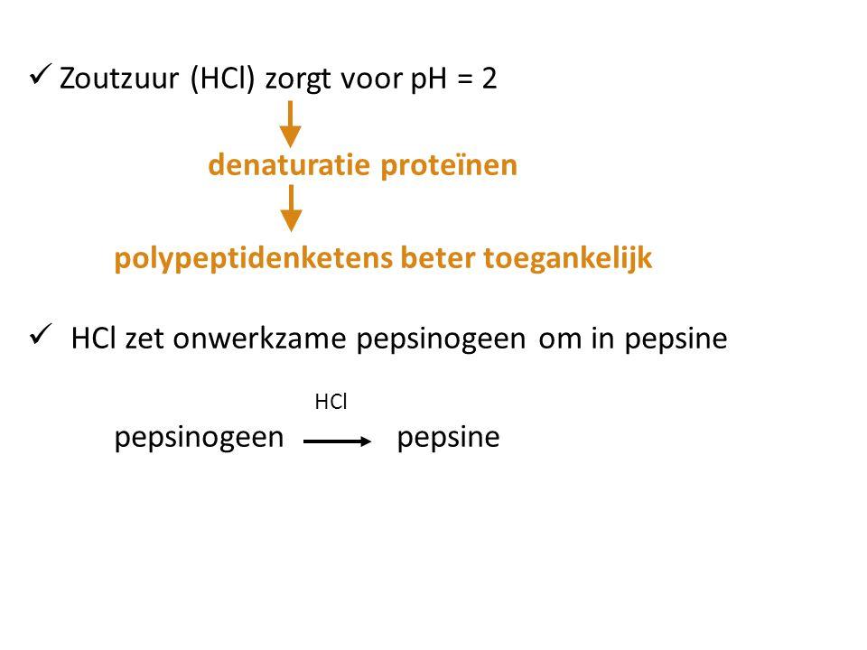 Zoutzuur (HCl) zorgt voor pH = 2 denaturatie proteïnen polypeptidenketens beter toegankelijk HCl zet onwerkzame pepsinogeen om in pepsine HCl pepsinog