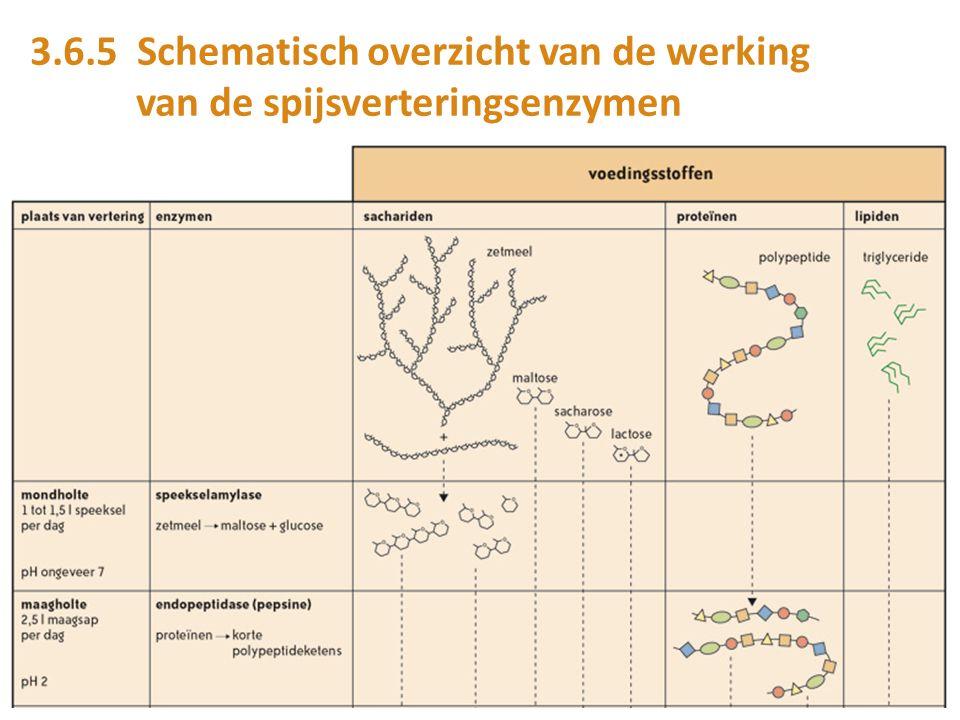 3.6.5 Schematisch overzicht van de werking van de spijsverteringsenzymen