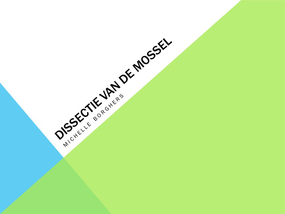 DISSECTIE VAN DE MOSSEL MICHELLE BORGHERS