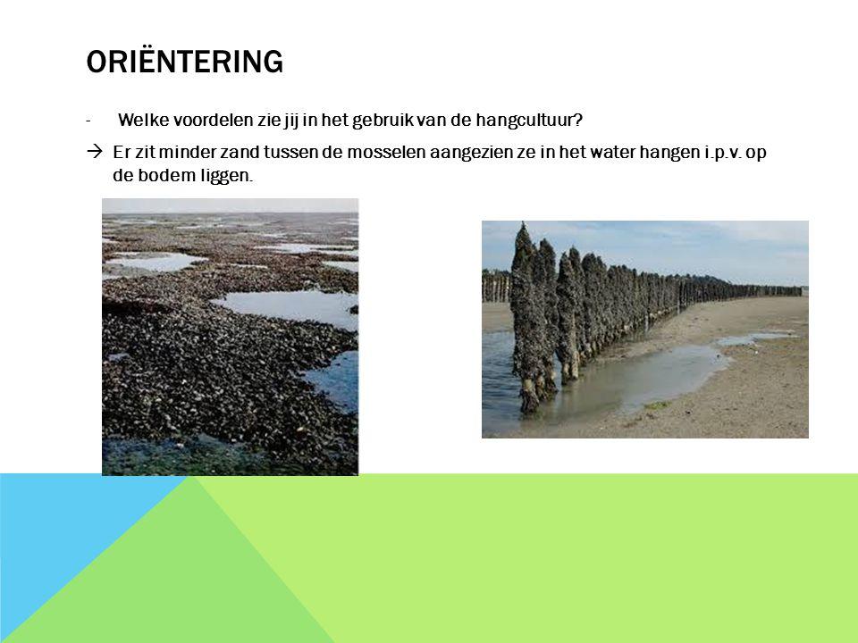 ORIËNTERING -Welke voordelen zie jij in het gebruik van de hangcultuur?  Er zit minder zand tussen de mosselen aangezien ze in het water hangen i.p.v