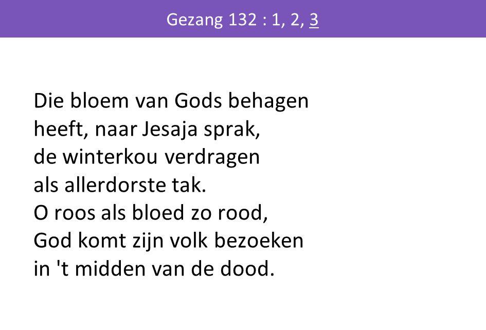 Die bloem van Gods behagen heeft, naar Jesaja sprak, de winterkou verdragen als allerdorste tak. O roos als bloed zo rood, God komt zijn volk bezoeken