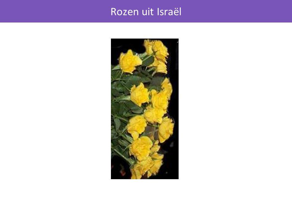 Rozen uit Israël