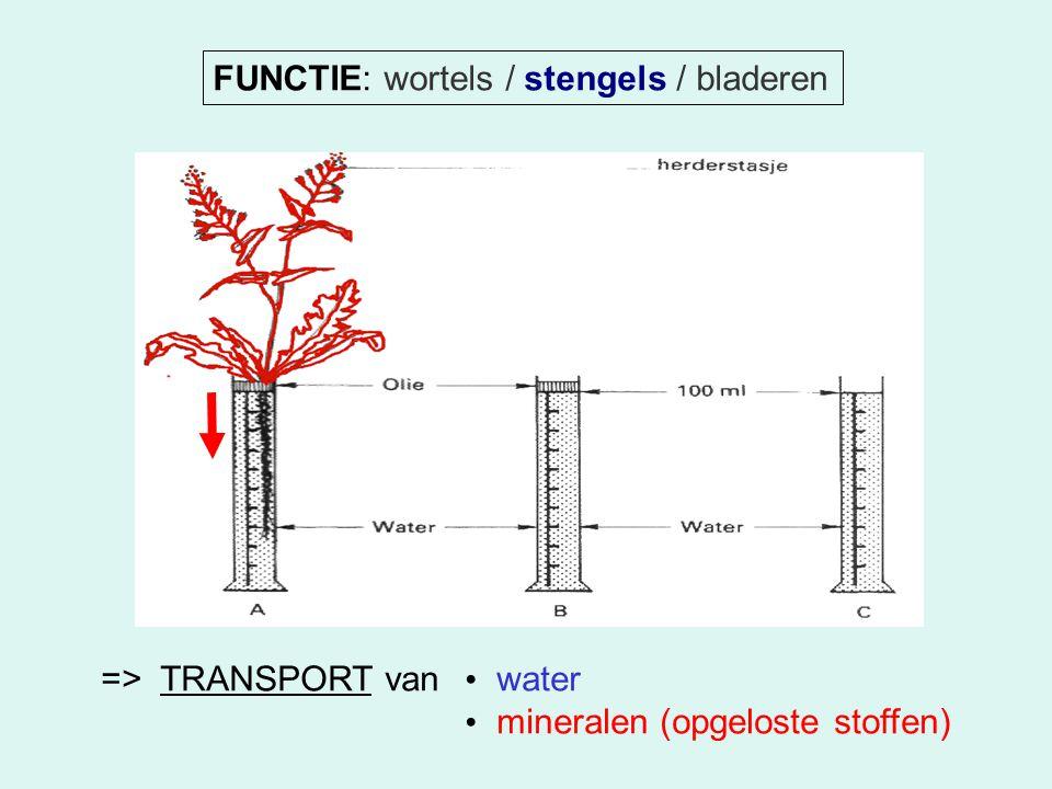 FUNCTIE: wortels / stengels / bladeren => TRANSPORT van water mineralen (opgeloste stoffen)