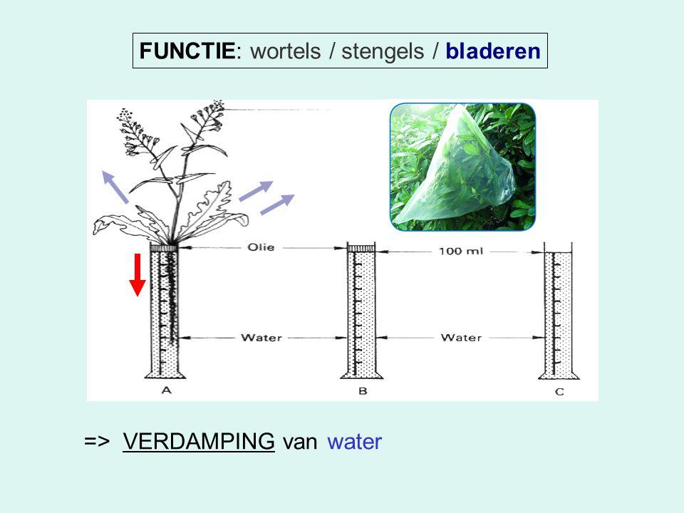 FUNCTIE: wortels / stengels / bladeren => VERDAMPING vanwater