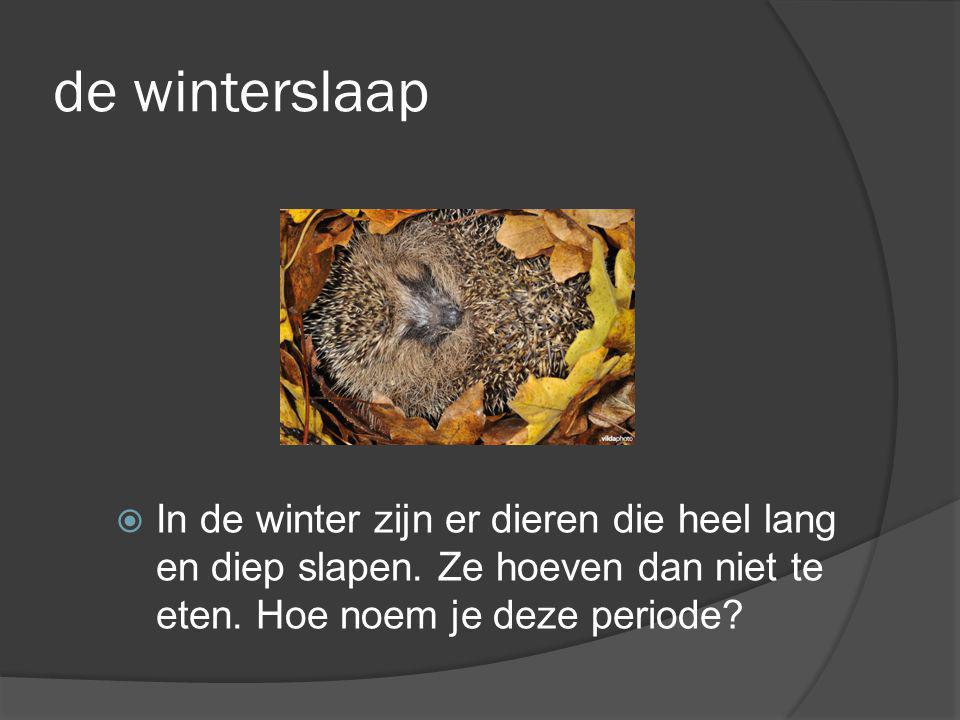 de winterslaap  In de winter zijn er dieren die heel lang en diep slapen. Ze hoeven dan niet te eten. Hoe noem je deze periode?