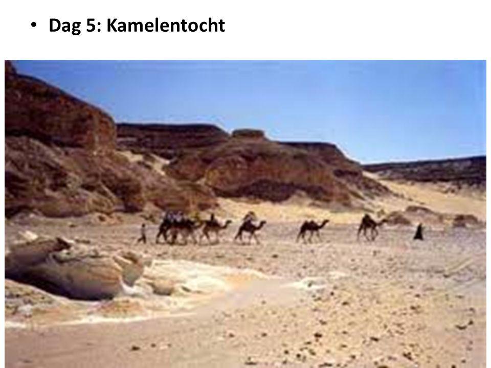 Dag 5: Kamelentocht