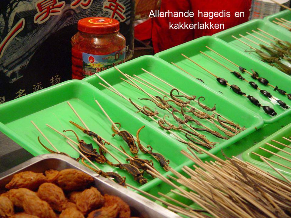 Oesters, inktvis en iguaneschoudertjes