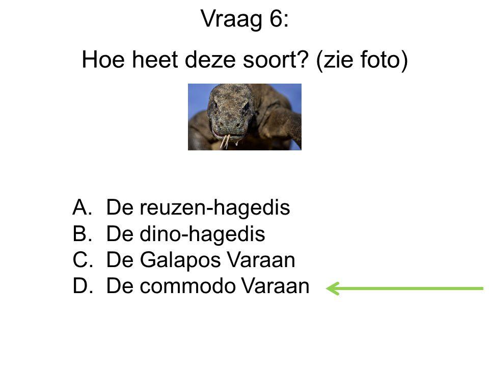 Hoe heet deze soort.(zie foto) A. De reuzen-hagedis B.