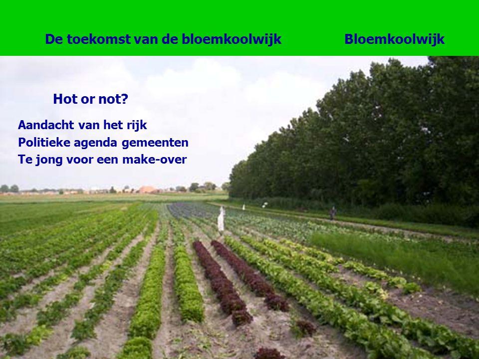 Bloemkoolwijk Hot or not.