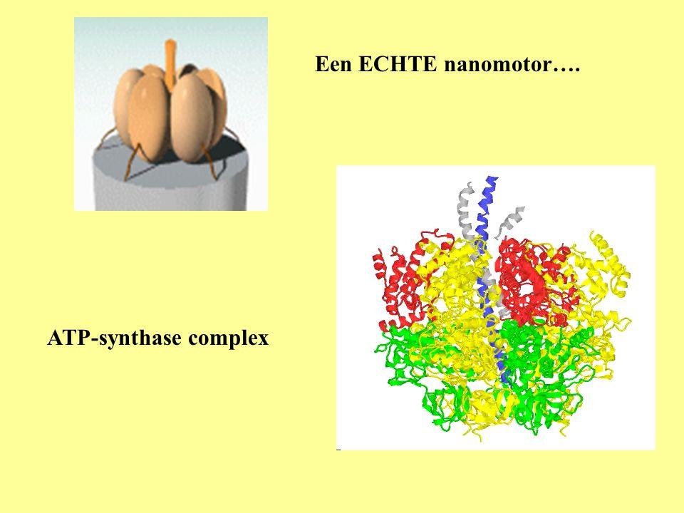 ATP-synthase complex Een ECHTE nanomotor….