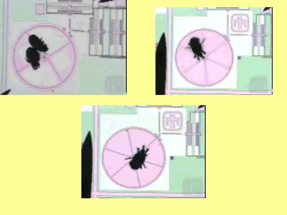 Maar dit is nog geen ECHTE nanotechnologie…. …Nu: the REAL stuff !