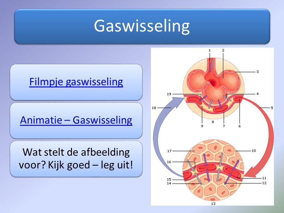 Gaswisseling Filmpje gaswisselingAnimatie – Gaswisseling Wat stelt de afbeelding voor? Kijk goed – leg uit!