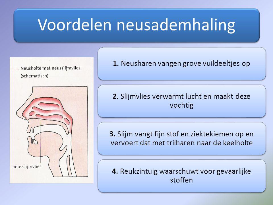 Voordelen neusademhaling 1. Neusharen vangen grove vuildeeltjes op 2. Slijmvlies verwarmt lucht en maakt deze vochtig 3. Slijm vangt fijn stof en ziek