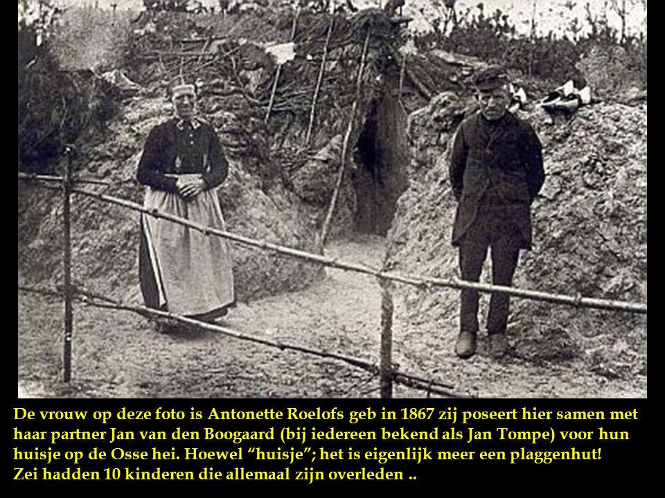 Een plaggenhut Wonen zoals de veenarbeider woonde met z'n gezin en z'n geit in 1900. In die tijd gold de ongeschreven regel dat een nieuw huis mocht b