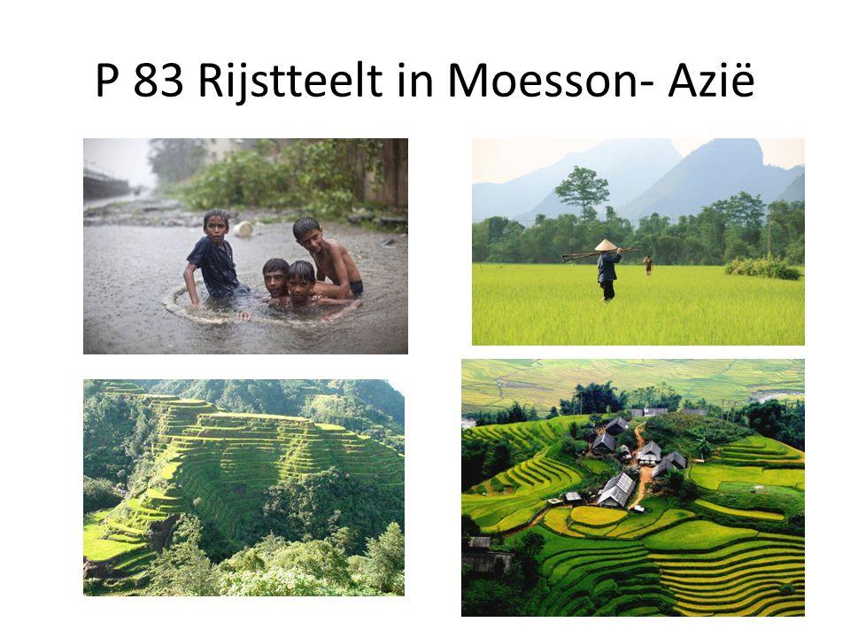 P 83 Rijstteelt in Moesson- Azië
