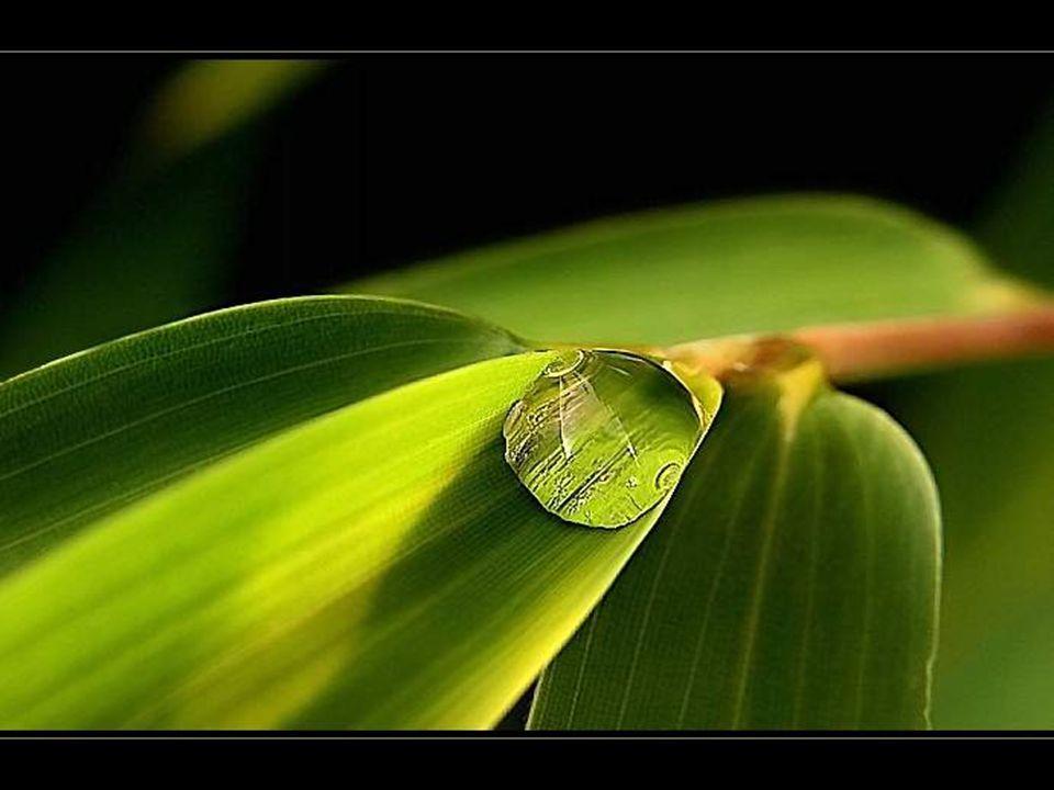 Op het moment dat men zich definitief tot iets verbindt, komt de voorzienigheid ook in beweging.