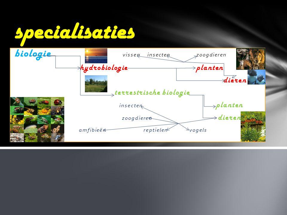 biologie vissen insecten zoogdieren hydrobiologie planten dieren terrestrische biologie insecten planten zoogdieren dieren amfibieën reptielen vogels