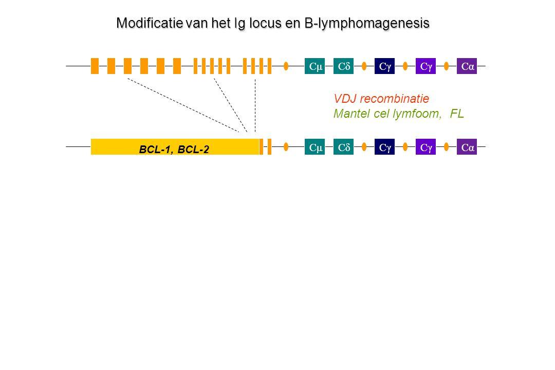 CμCδCγ Cα Cγ CμCδCα Modificatie van het Ig locus en B-lymphomagenesis VDJ recombinatie Mantel cel lymfoom, FL BCL-1, BCL-2