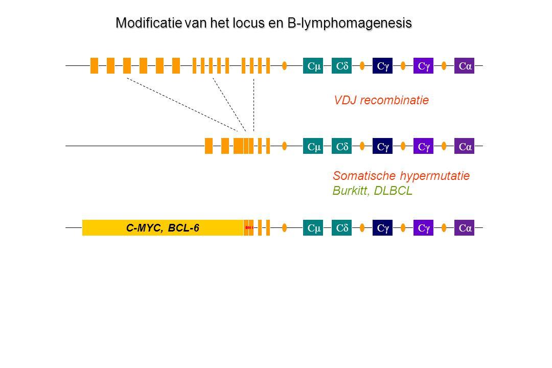 CμCδCγ Cα Cγ CμCδCα Cγ CαCμCδ C-MYC, BCL-6 Modificatie van het locus en B-lymphomagenesis VDJ recombinatie Somatische hypermutatie Burkitt, DLBCL