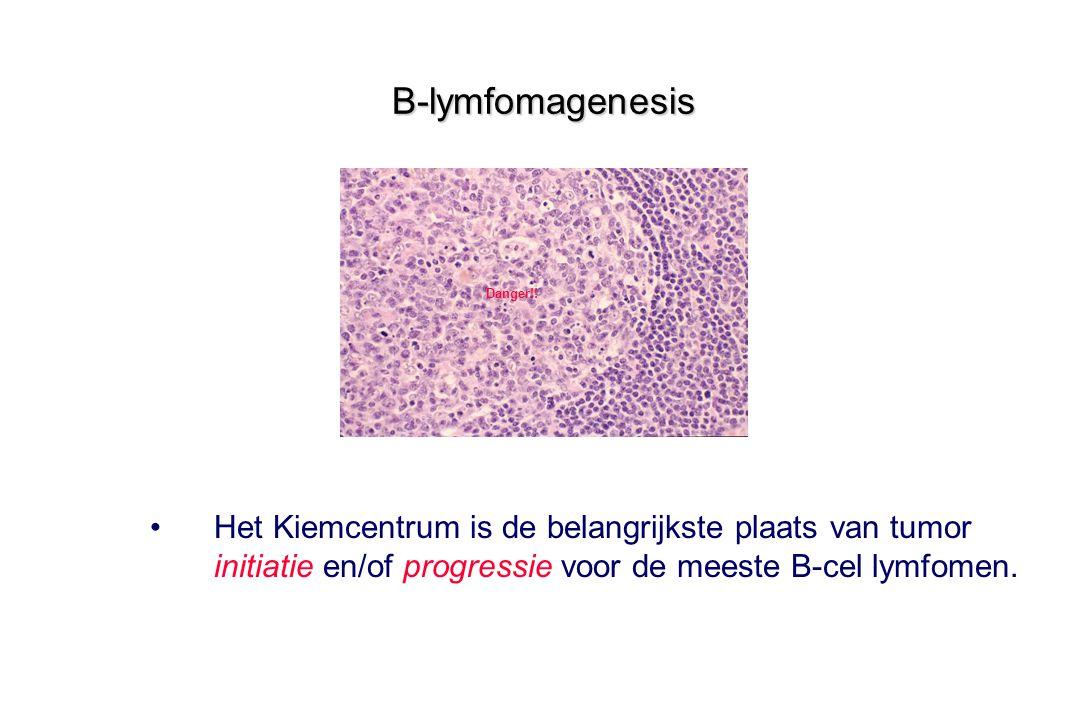 B-lymfomagenesis Het Kiemcentrum is de belangrijkste plaats van tumor initiatie en/of progressie voor de meeste B-cel lymfomen. Danger!!